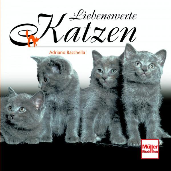 Liebenswerte Katzen