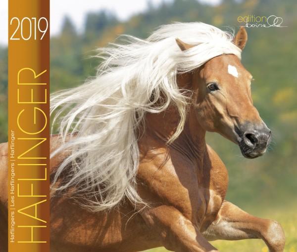 Haflinger Boiselle 2019