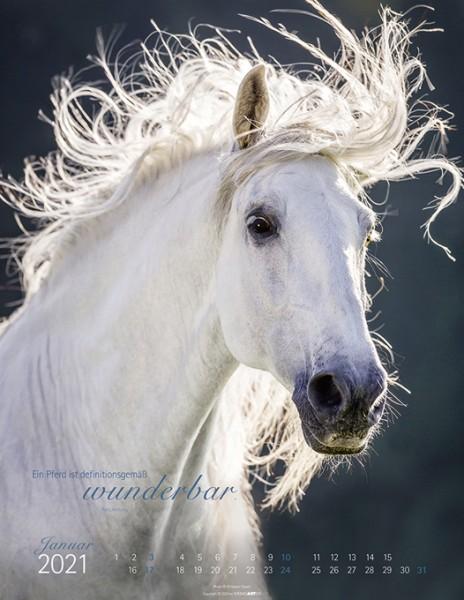 Die Anmut der Pferde 2021