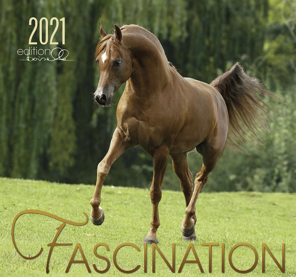 Fascination Arabische Pferde 2021 Boiselle