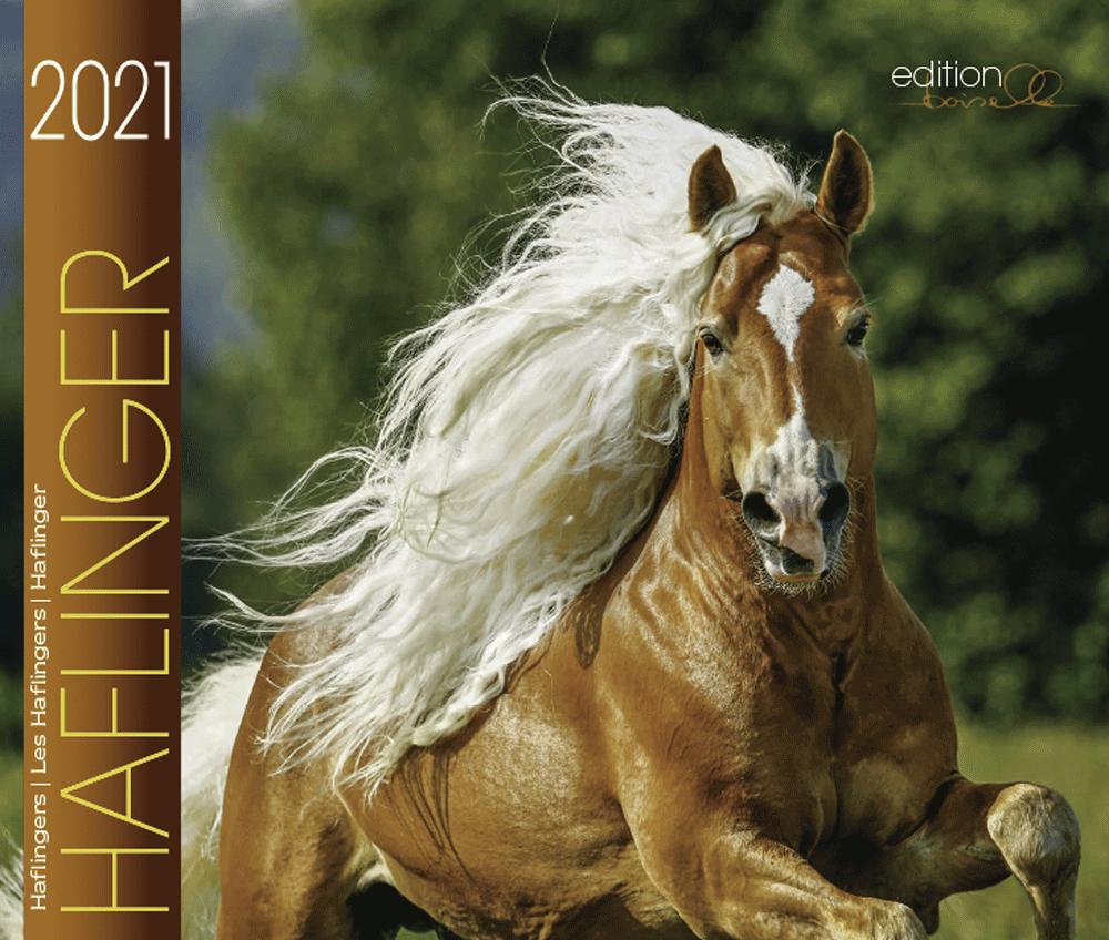 Haflinger Boiselle 2021