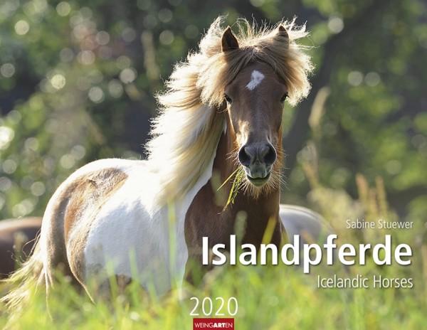 Islandpferde 2020