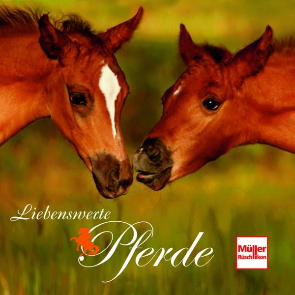 Liebenswerte Pferde