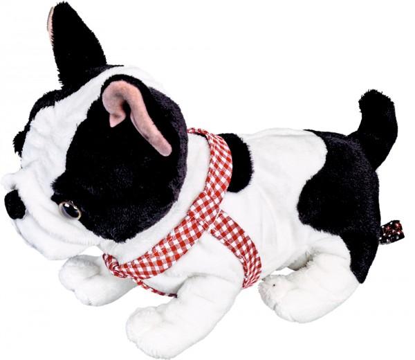 Französische Bulldogge Paulinchen