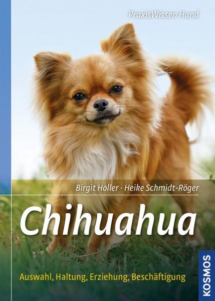 Hunderassen: Chihuahua