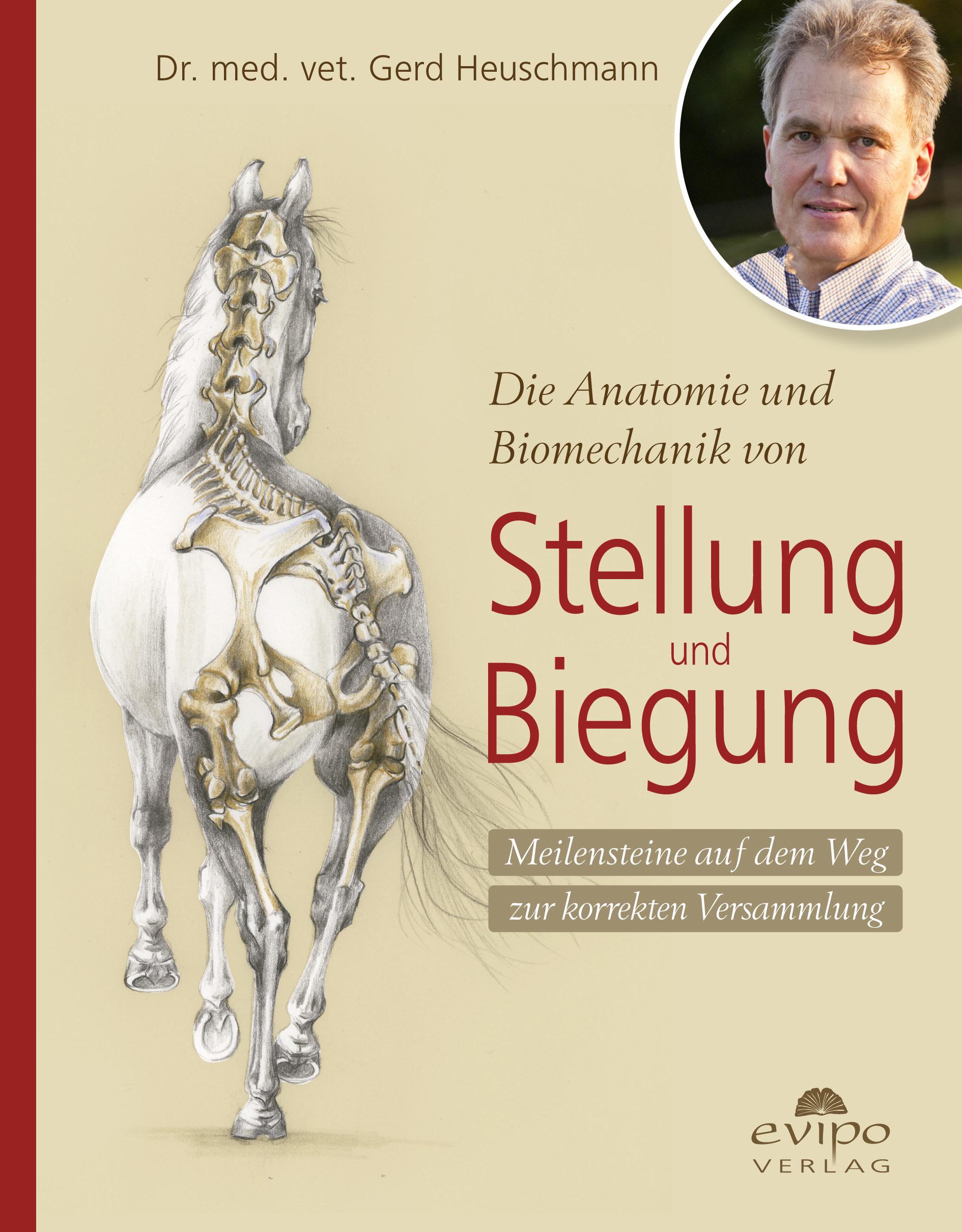 Dr. Gerd Heuschmann Die Anatomie und Biomechanik von Stellung und ...