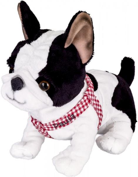 Französische Bulldogge Paula