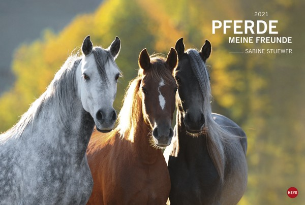 Pferde Meine Freunde 2021